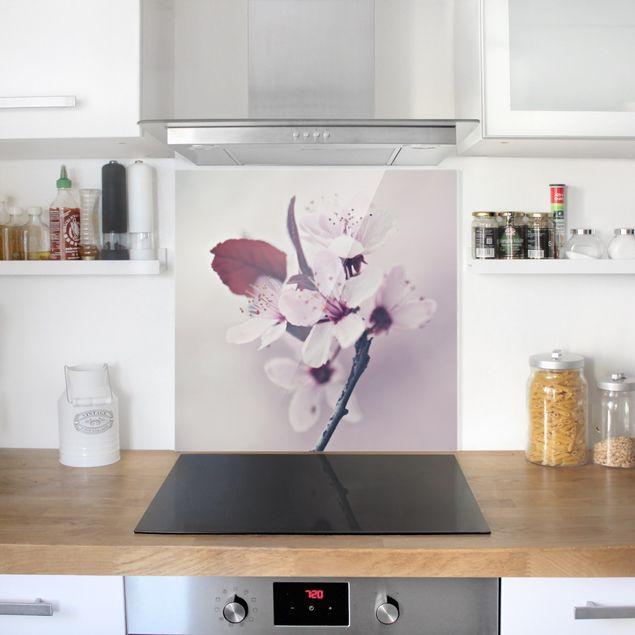 Spritzschutz Glas - Kirschblütenzweig Altrosa - Quadrat 1:1