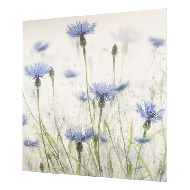Spritzschutz Glas - Kornblumen und Gräser im Feld - Quadrat 1:1