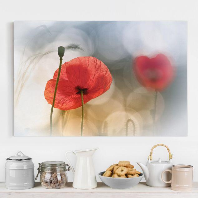 Leinwandbild - Mohnblumen am Morgen - Quer 3:2