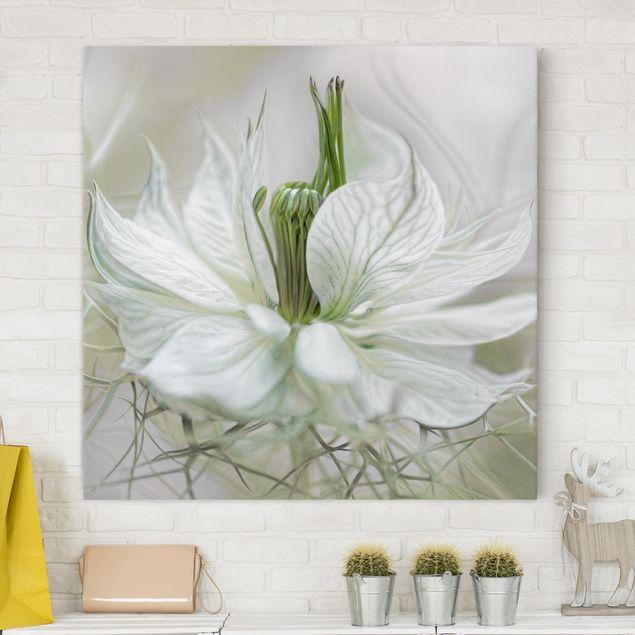 Leinwandbild - Weiße Nigella - Quadrat 1:1