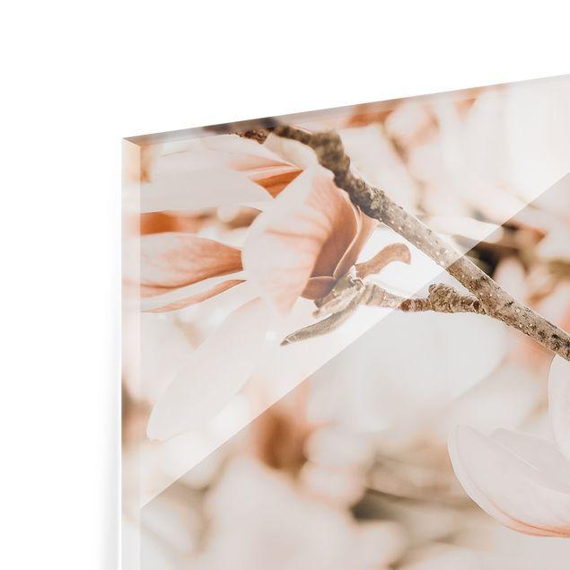 Spritzschutz Glas - Magnolienzweige im Vintagestil - Querformat 2:1