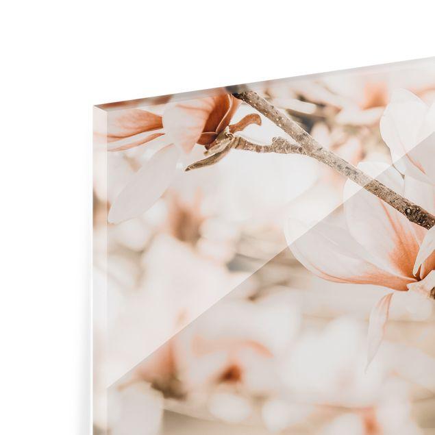 Spritzschutz Glas - Magnolienzweige im Vintagestil - Querformat 3:2