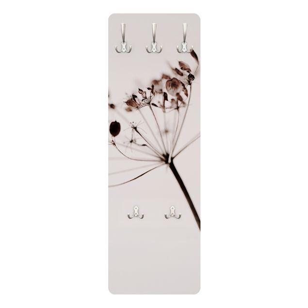 Garderobe - Makroaufnahme Trockenblume im Schatten