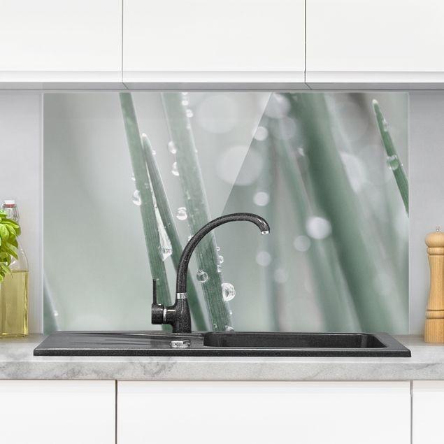 Spritzschutz Glas - Makroaufnahme Wasserperlen am Gras - Querformat 3:2