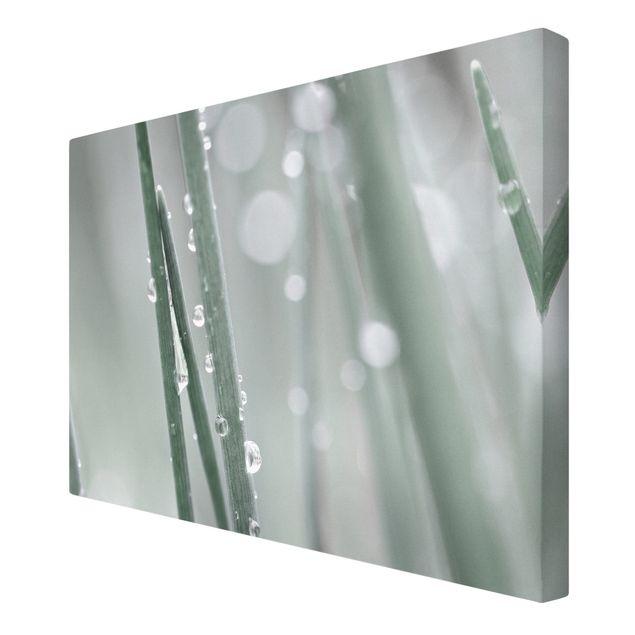 Leinwandbild - Makroaufnahme Wasserperlen am Gras - Querformat 3:2