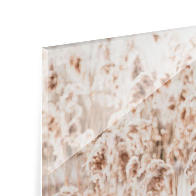 Spritzschutz Glas - Meer von sonnigem Schilfgras - Querformat 2:1