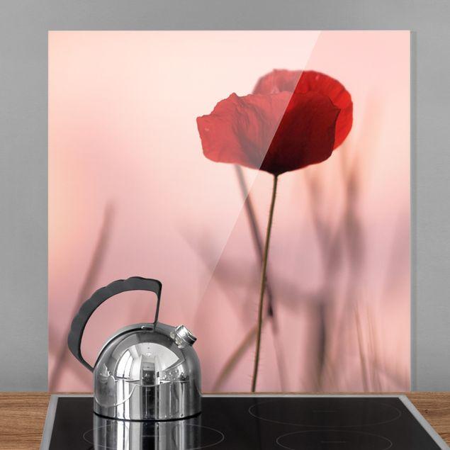 Spritzschutz Glas - Mohnblüte in der Dämmerung - Quadrat 1:1