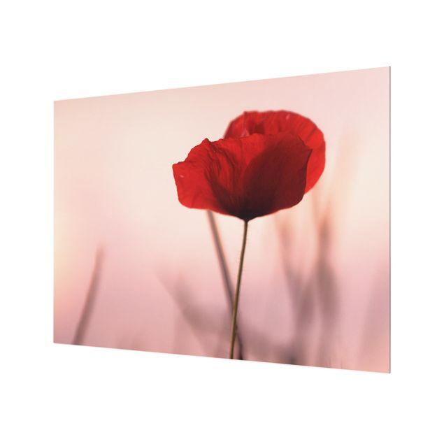 Spritzschutz Glas - Mohnblüte in der Dämmerung - Querformat 4:3