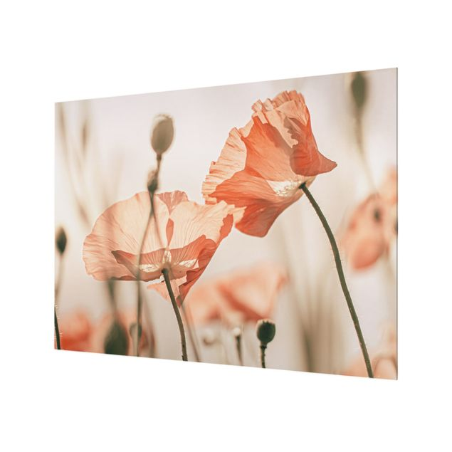 Spritzschutz Glas - Mohnblüten im Sommerwind - Querformat 4:3
