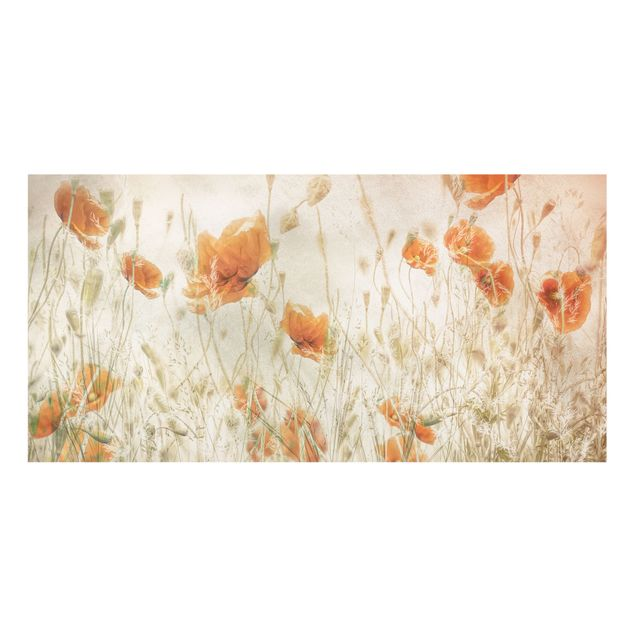 Spritzschutz Glas - Mohnblumen und Gräser im Feld - Querformat 2:1