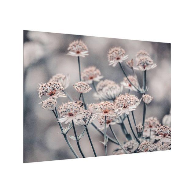 Spritzschutz Glas - Mystischer Blütenstrauch - Querformat 4:3