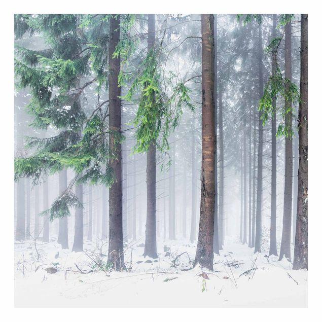 Spritzschutz Glas - Nadelbäume im Winter - Quadrat 1:1