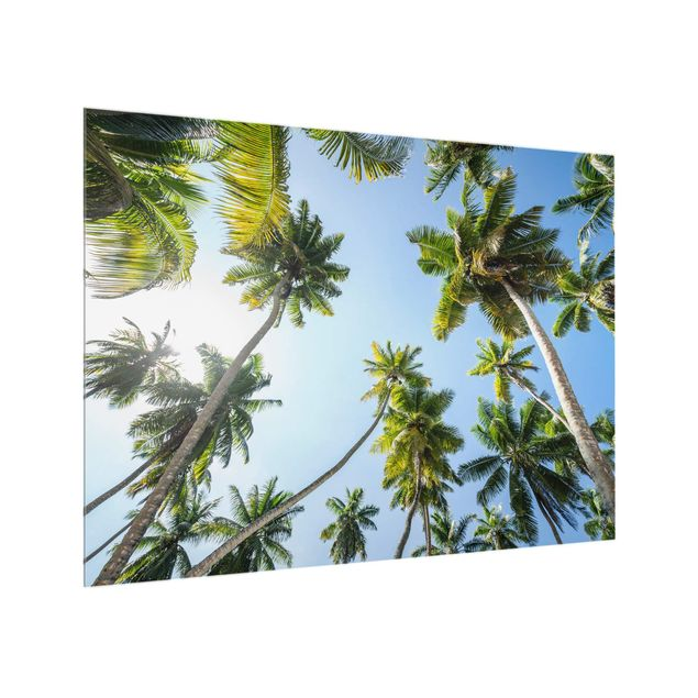 Spritzschutz Glas - Palmen Himmel - Querformat 4:3