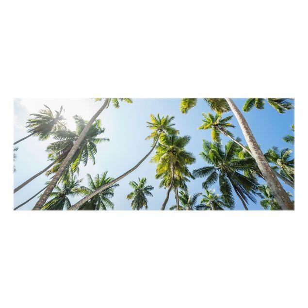 Spritzschutz Glas - Palmen Himmel - Panorama 5:2