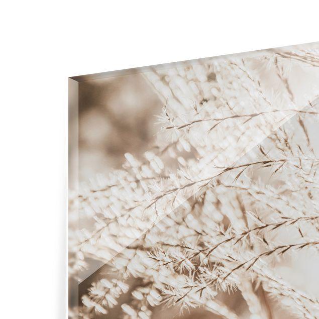 Spritzschutz Glas - Pampasgras Close Up - Querformat 3:2