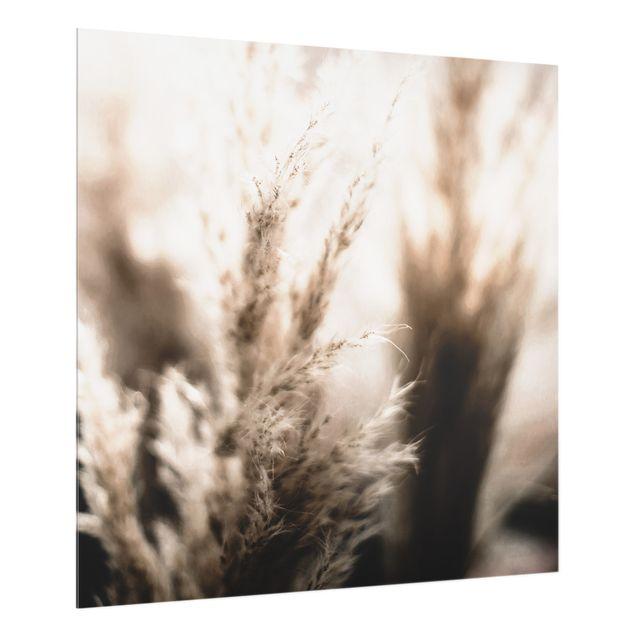 Spritzschutz Glas - Pampasgras im Schatten - Quadrat 1:1