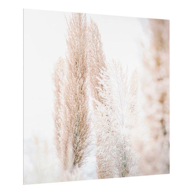 Spritzschutz Glas - Pampasgras im Weißen Licht - Quadrat 1:1