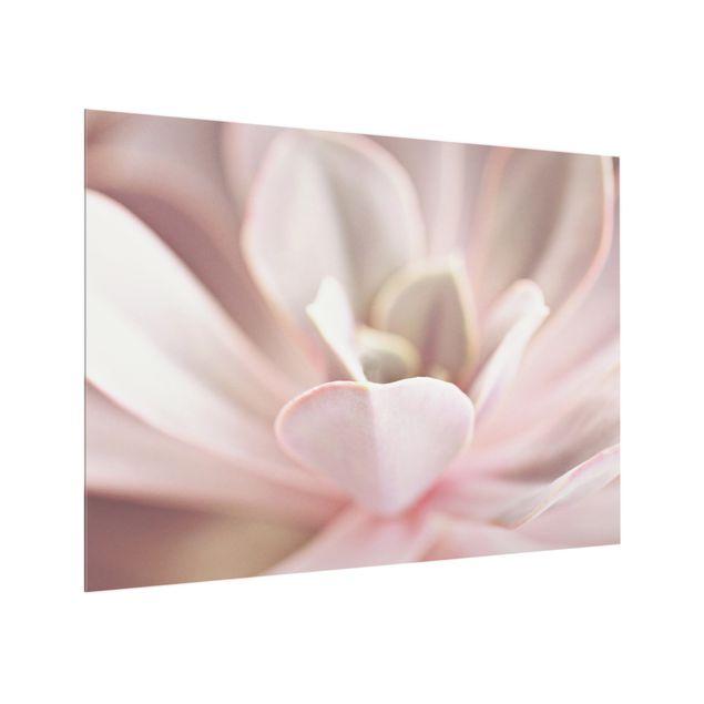 Spritzschutz Glas - Rosane Sukkulentenblüte - Querformat 4:3