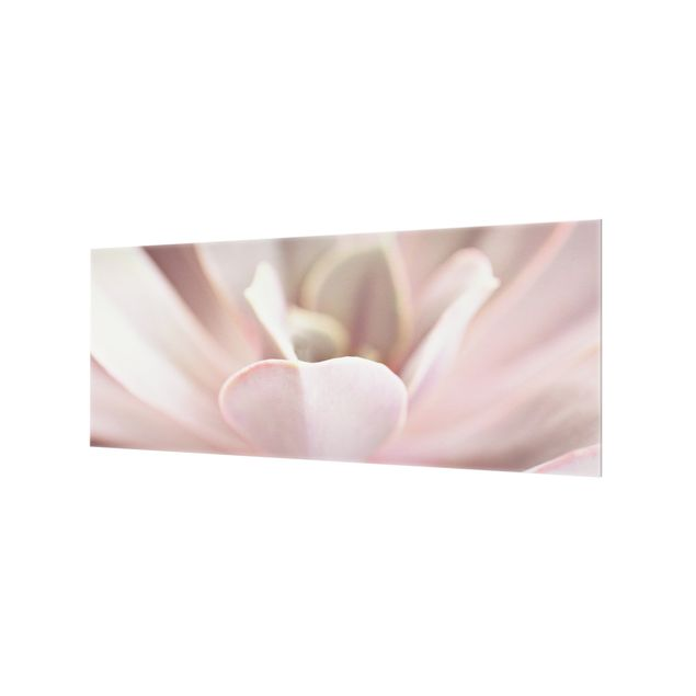 Spritzschutz Glas - Rosane Sukkulentenblüte - Panorama 5:2