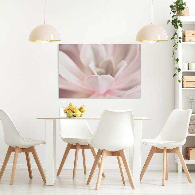 Leinwandbild - Rosane Sukkulentenblüte - Querformat 3:2