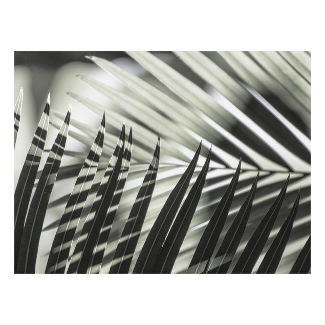 Spritzschutz Glas - Schattenspiel auf Palmenwedel - Querformat 4:3