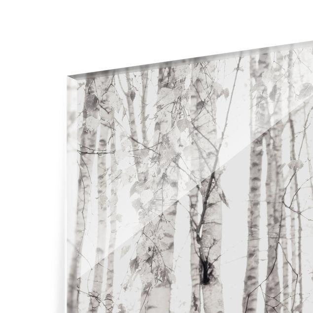 Spritzschutz Glas - Silberbirke im weißen Licht - Querformat 4:3