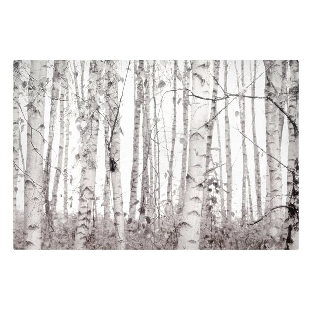 Leinwandbild - Silberbirke im weißen Licht - Querformat 3:2