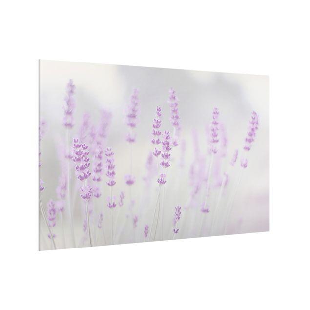 Spritzschutz Glas - Sommer im Lavendelfeld - Querformat 3:2