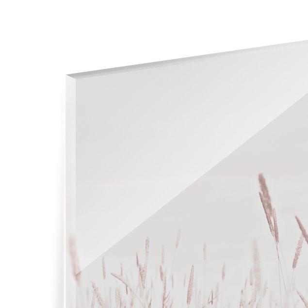 Spritzschutz Glas - Sommerliches Schilfgras - Querformat 3:2