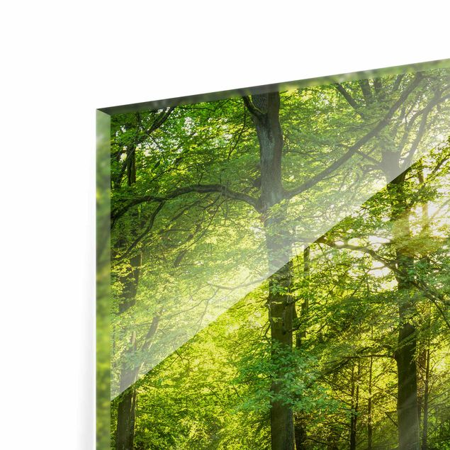 Spritzschutz Glas - Spaziergang im Wald - Querformat 4:3