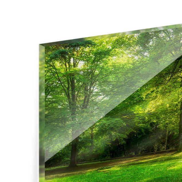 Spritzschutz Glas - Spaziergang im Wald - Panorama 5:2