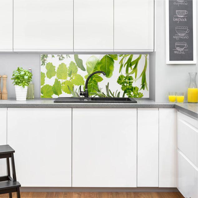 Spritzschutz Glas - Verschiedene Kräuter - Panorama