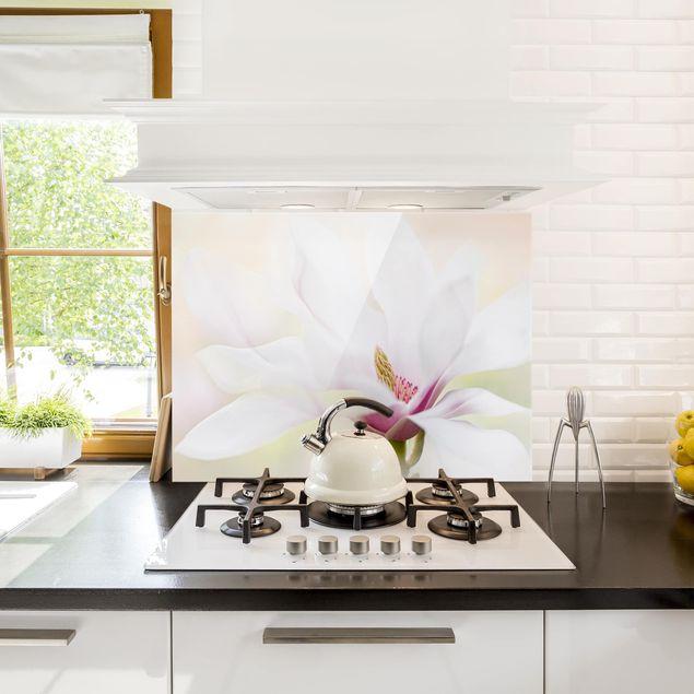Spritzschutz Glas - Zarte Magnolienblüte - Querformat 2:1