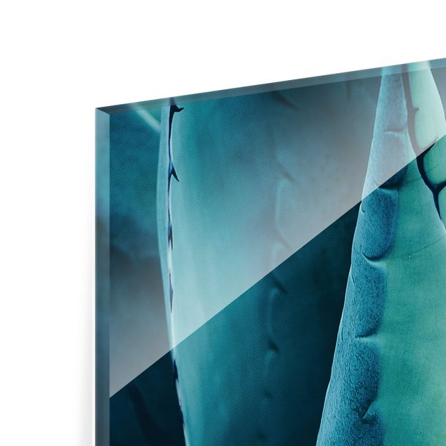 Spritzschutz Glas - Sukkulente Petrol I - Quadrat 1:1