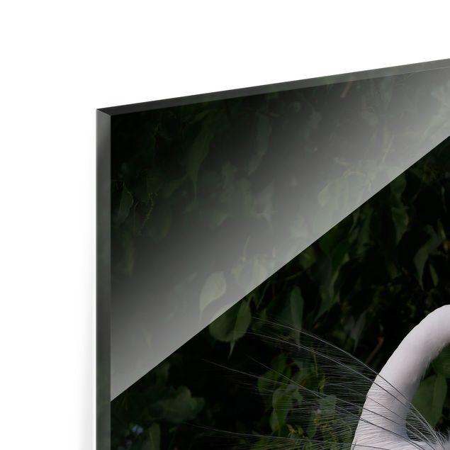 Spritzschutz Glas - Tanzender Silberreiher vor Schwarz - Quadrat 1:1