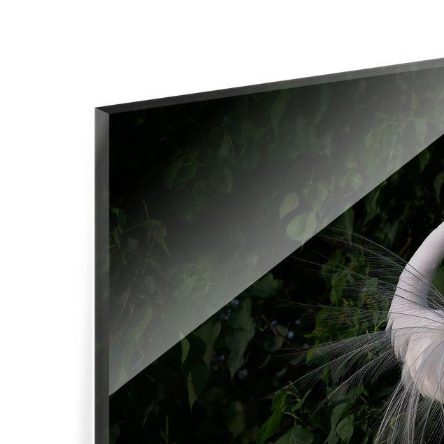 Spritzschutz Glas - Tanzender Silberreiher vor Schwarz - Querformat 3:2
