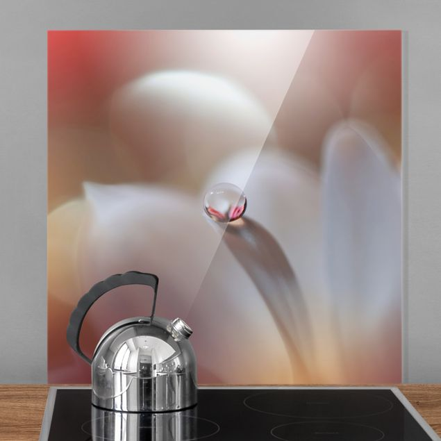 Spritzschutz Glas - Tautropfen auf rosa Blüte - Quadrat 1:1