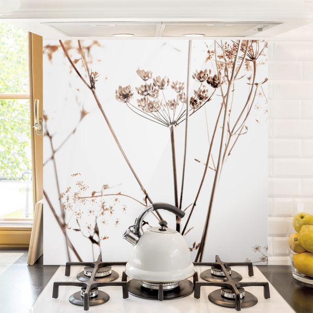 Spritzschutz Glas - Trockenblume im Lichtspiel - Quadrat 1:1