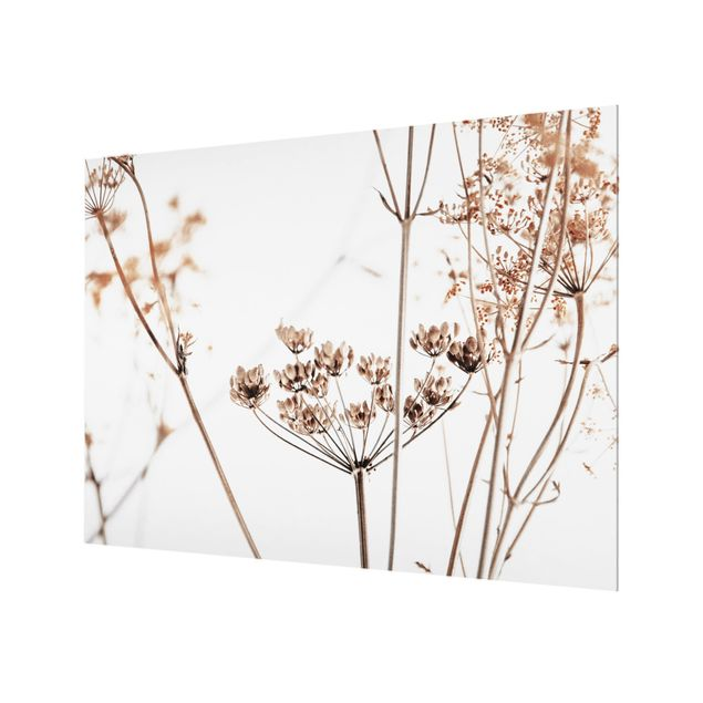 Spritzschutz Glas - Trockenblume im Lichtspiel - Querformat 4:3