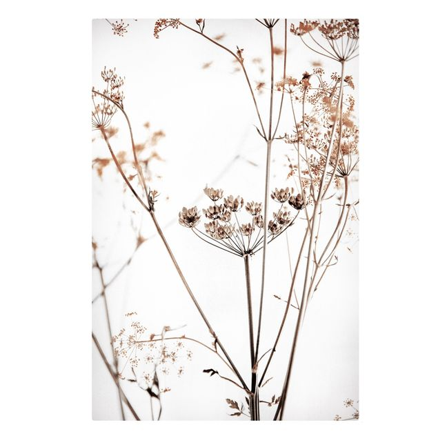 Leinwandbild - Trockenblume im Lichtspiel - Hochformat 2:3