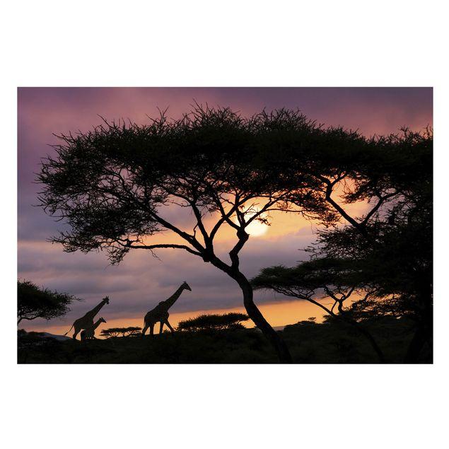 Fototapete Safari in Afrika