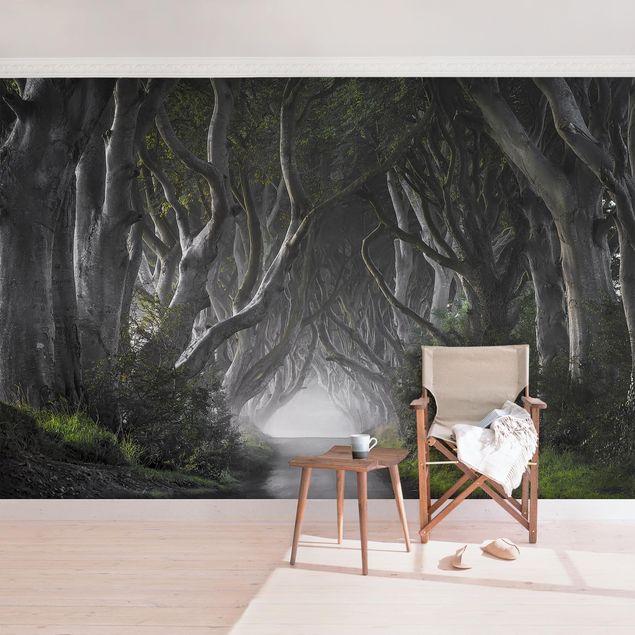 Fototapete Wald in Nordirland
