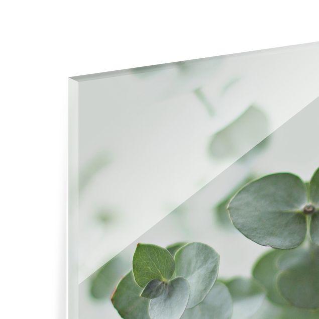 Spritzschutz Glas - Wachsende Eukalyptuszweige - Quadrat 1:1