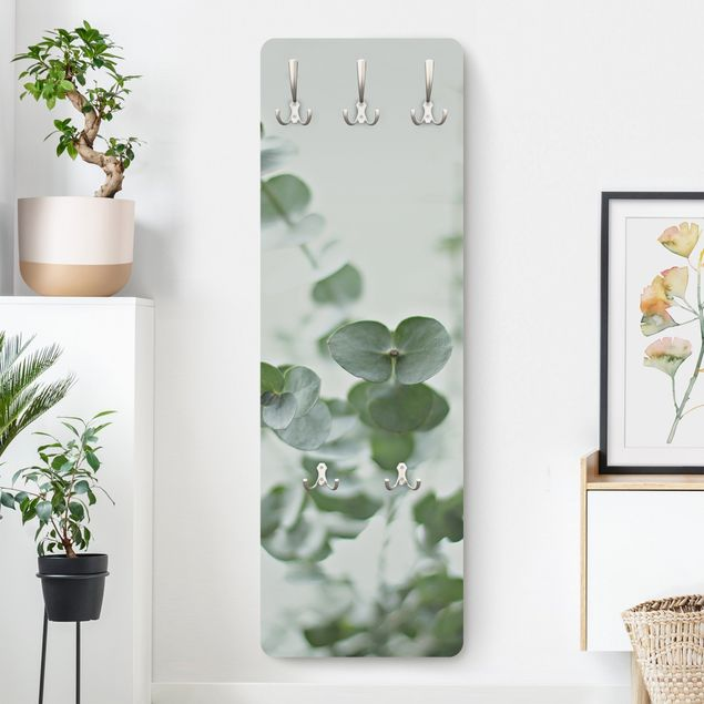 Garderobe - Wachsende Eukalyptuszweige