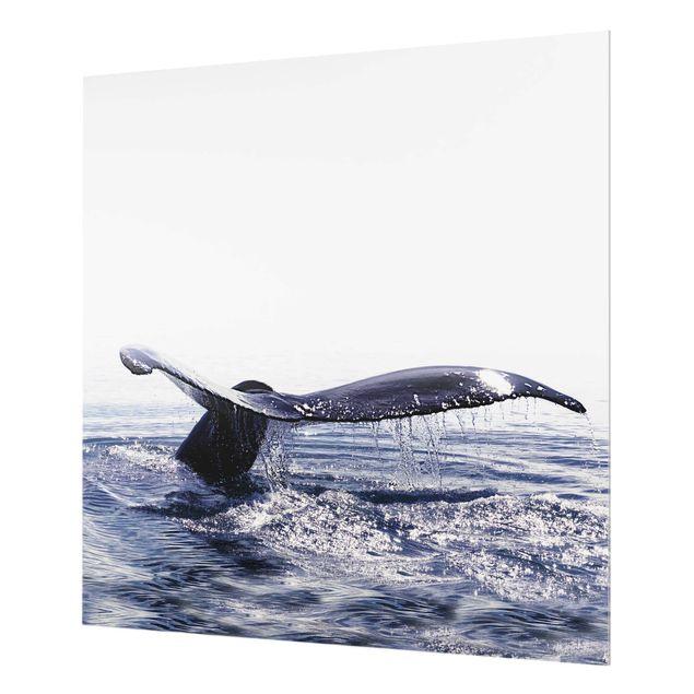 Spritzschutz Glas - Wal Gesang auf Island - Quadrat 1:1