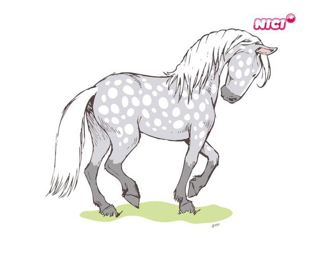 Wandtattoo Horse Club Apfelschimmel elegant