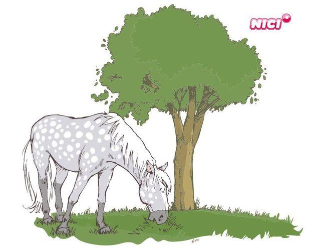 Wandtattoo Horse Club Apfelschimmel grasend