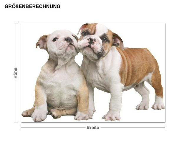 Wandtattoo Schmusende Bulldoggenwelpen