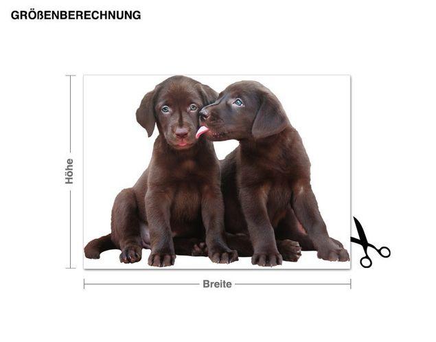 Wandtattoo Süße Labrador Welpen
