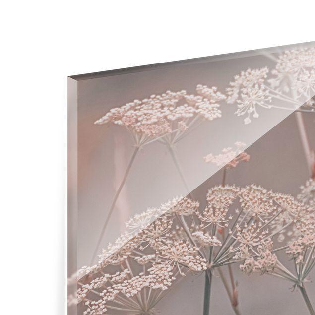 Spritzschutz Glas - Wilde Doldenblüten - Querformat 4:3